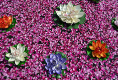 Blomma och rosa kronblad på vatten Arkivbild
