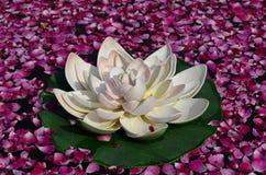 Blomma och rosa kronblad på vatten Fotografering för Bildbyråer
