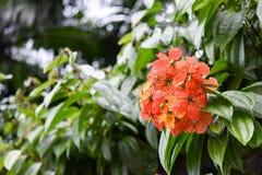 Blomma och sidor på en parkera Royaltyfri Foto
