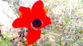 Blomma och signalljus Arkivbilder