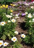 Blomma- och stamlodlinje för gul och vit tusensköna arkivfoto