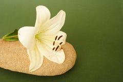 Blomma och sten fotografering för bildbyråer