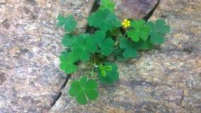 Blomma och sten Royaltyfri Fotografi