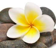 Blomma och stenar Arkivbilder