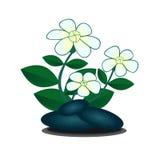 Blomma och stenar Fotografering för Bildbyråer