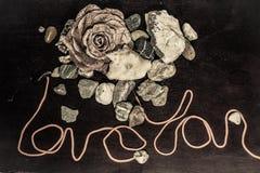 Blomma och stenar Royaltyfria Bilder