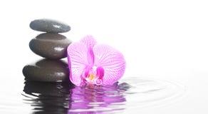 Blomma och stenar i vatten Fotografering för Bildbyråer