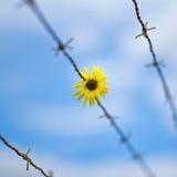 Blomma och taggtråd Royaltyfria Bilder