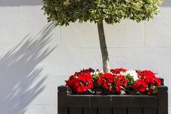 blomma och träd royaltyfri fotografi