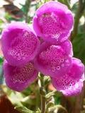 Blomma och trädgård Arkivbilder