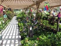 Blomma- och växtskärm, botanisk trädgårdmitt, Claremont, Kalifornien, USA Royaltyfria Foton