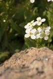 Blomma och vagga Arkivbild
