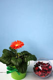 Blomma och vas med rosa kronblad Arkivfoton