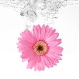 Blomma och vatten Royaltyfria Bilder