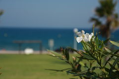 Blomma på bakgrund av havet Arkivfoton