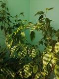 Blomma på balkongen under strålarna av solen arkivbild