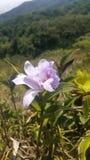 Blomma på berget Royaltyfria Foton