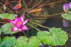 Blomma på bevattna royaltyfri foto