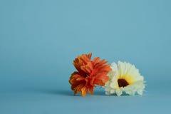 Blomma på blå bakgrund Royaltyfri Foto