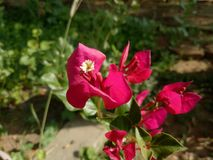 Blomma på blomman Royaltyfri Bild