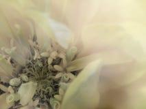 Blomma på den genomskinliga suddiga bakgrunden Närbild alla några objekt för den blom- illustrationen för sammansättningselement  Royaltyfria Bilder
