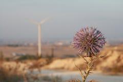 Blomma på den taggiga växt- och för maktgenerator väderkvarnen i bakgrunden fotografering för bildbyråer