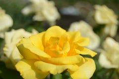 Blomma på en bakgrund av blommor arkivfoton