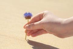 Blomma på en sand Arkivbild