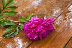 Blomma på en tabell Royaltyfri Bild