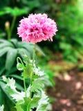 Blomma på en trädgård Arkivbild