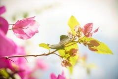 Blomma på ett träd Arkivfoto