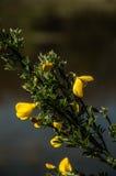 Blomma på fälten Arkivbild
