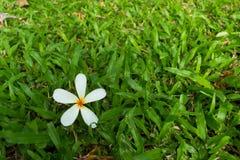Blomma på gräs Arkivbilder