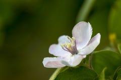 Blomma på grön bakgrund Fotografering för Bildbyråer