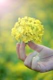 Blomma på handen Royaltyfri Bild