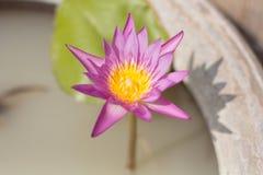 Blomma på kruset Arkivfoton