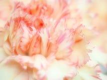 Blomma på mjukt ljus Royaltyfria Foton