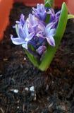 Blomma på morgonen royaltyfri foto