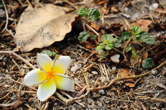 Blomma på nedgången Arkivfoton