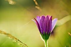 Blomma på sommaräng royaltyfria foton