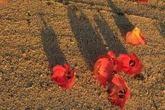Blomma på stranden Royaltyfria Foton