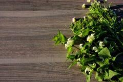 blomma på trä Arkivbild