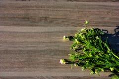 blomma på trä Fotografering för Bildbyråer