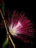 Blomma på träd Arkivbild