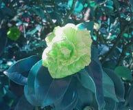 Blomma på trädet med ett grönt filter arkivfoto