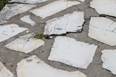 Blomma på trottoaren Royaltyfria Foton