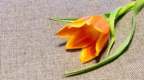 Blomma på tygbakgrunden Royaltyfria Bilder