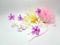 Blomma på vitbakgrund Royaltyfri Fotografi