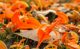Blomma Palas som faller på jordningen Royaltyfria Bilder