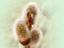 blomma pil arkivbild